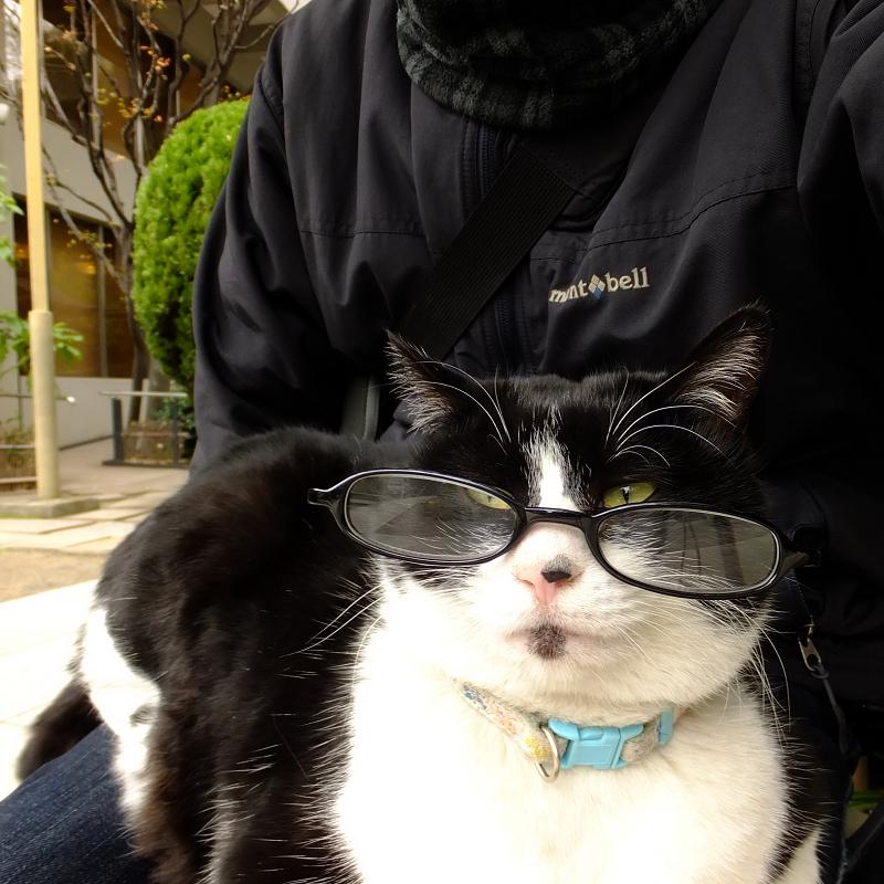 黒い眼鏡を掛けた黒白ネコ