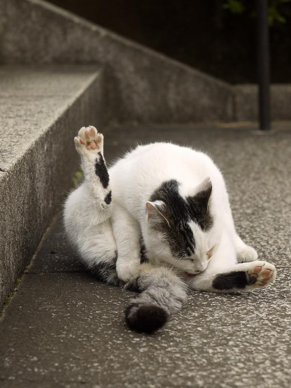 足を上げて毛繕いしている仔猫