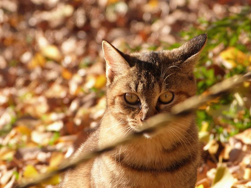 冬の空き地ネコ