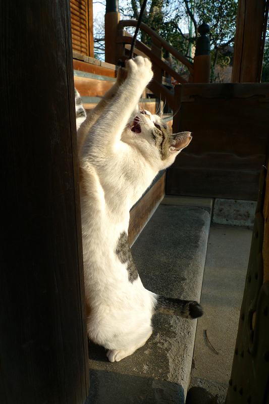 お堂で興奮するネコ
