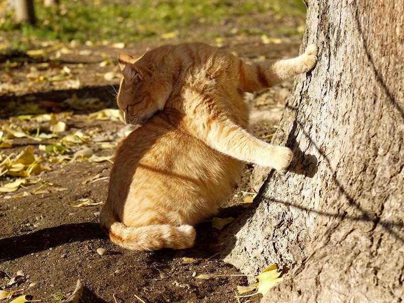 気に手を付いて背中を舐めるネコ