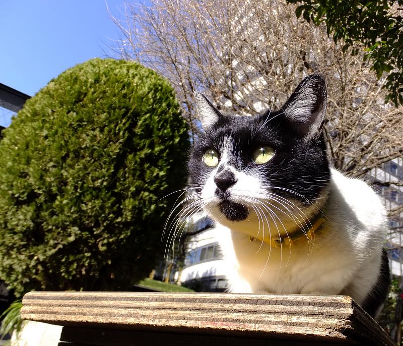 ベンチから空を見てるネコ