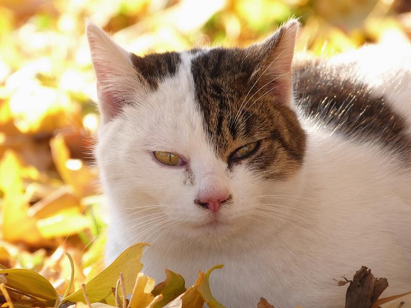 黄色い光のネコ