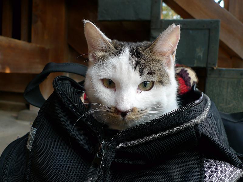 カメラバッグに入れられたネコ