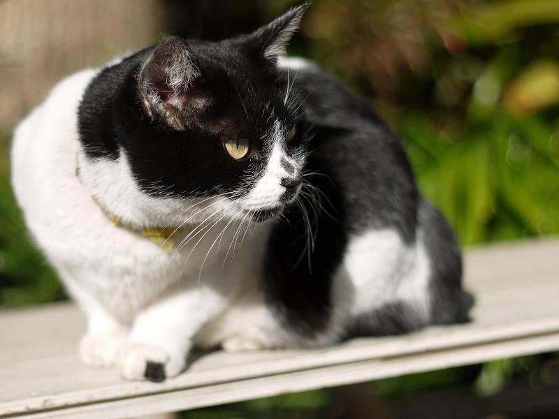 ベンチから睨んでるネコ