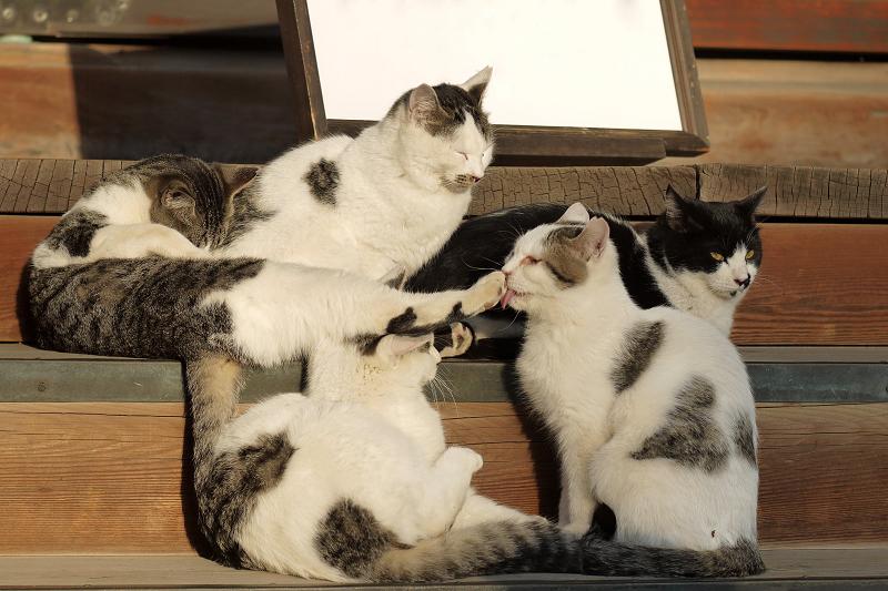 階段で好き勝手なポーズのネコ