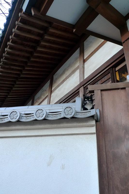 お寺の塀瓦のネコ