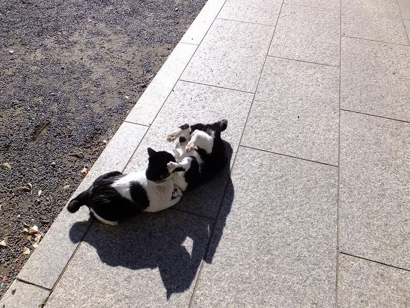 柔道技を出してるネコ