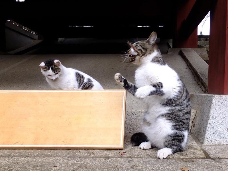 何かを口にくわえてるネコ