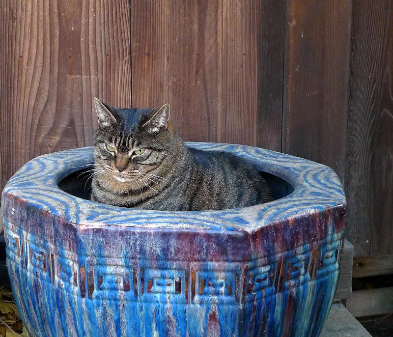 火鉢に入ってるネコ