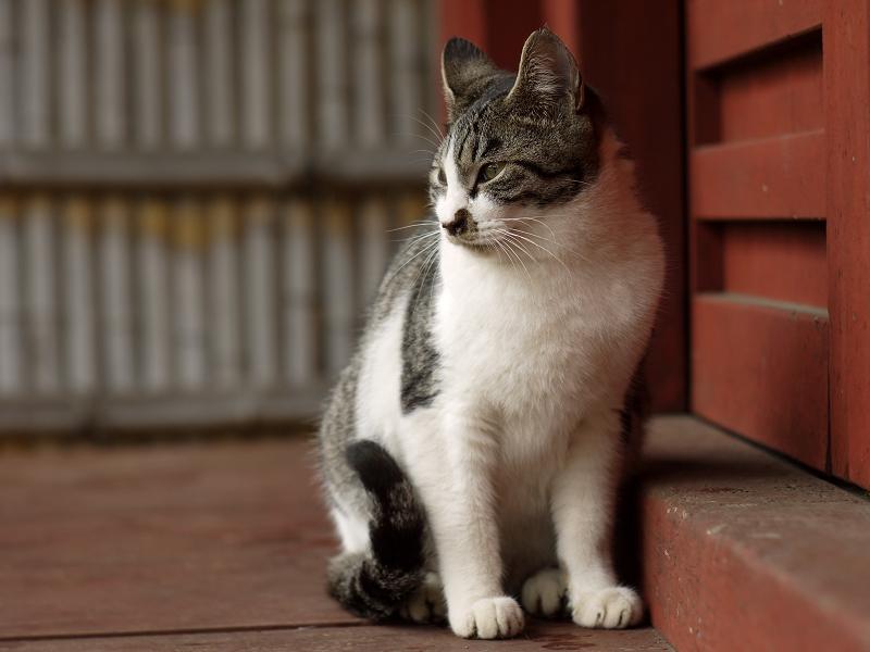 竹垣の前のネコ