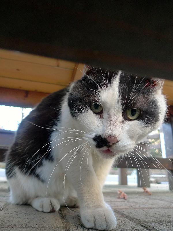 ベンチの下からカメラを見てるネコ