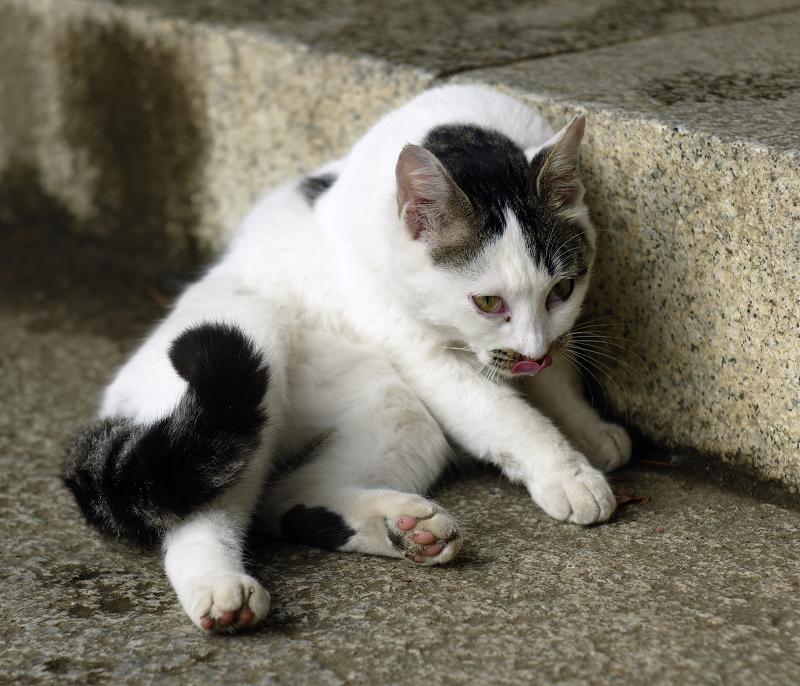 どっこいしょと起き上がるネコ