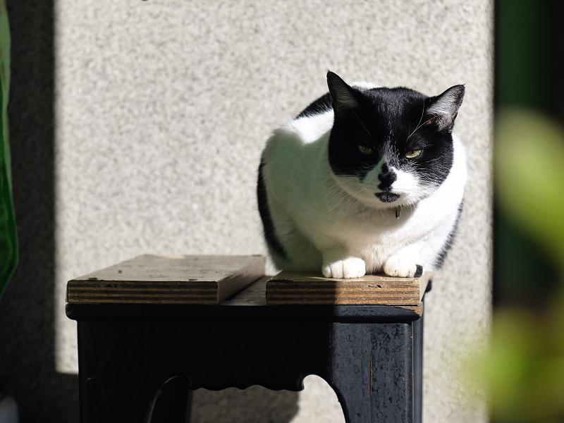 踏み台に座ってるネコ