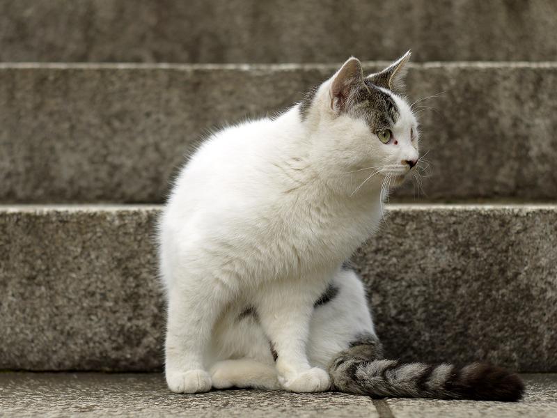 仔猫から大きくなったネコ