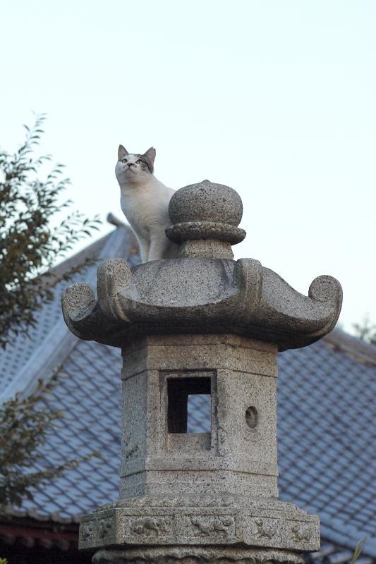 石灯籠に登り上がってるネコ