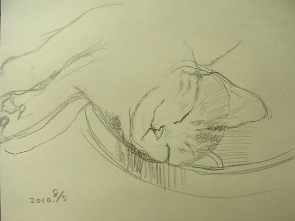 文蔵の寝姿20100805