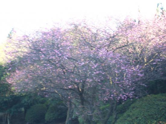 2013.2.13千葉7
