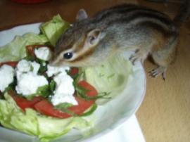 サラダ盗み食い