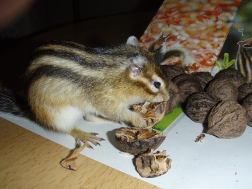 鬼ぐるみを食べるナッツ君