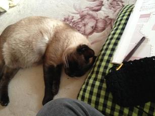 編みものと猫。幸せだな~♪