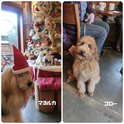 2014-12-1.jpg