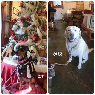 2014-12-12.jpg