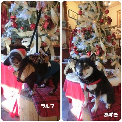 2014-12-18.jpg