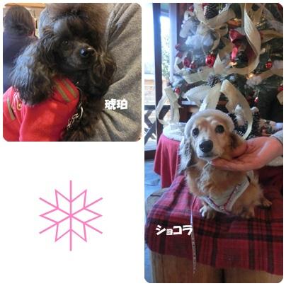 2014-12-19.jpg