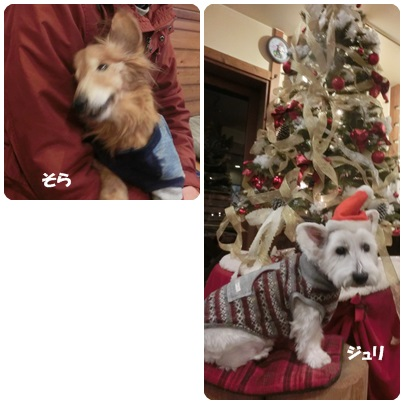 2014-12-27.jpg
