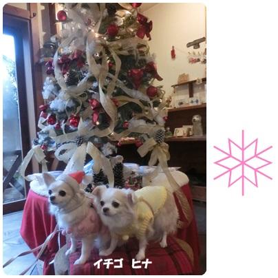 2014-12-3.jpg