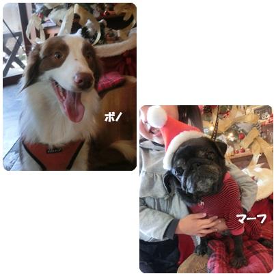 2014-12-30.jpg