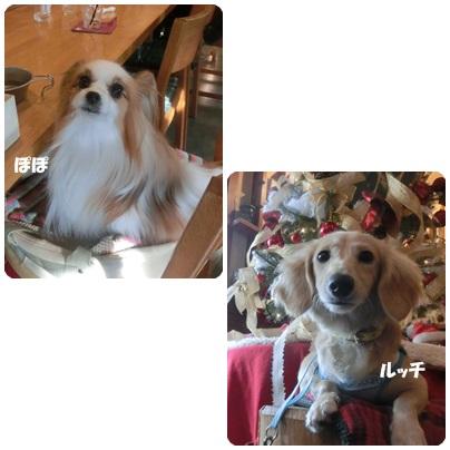 2014-12-33.jpg