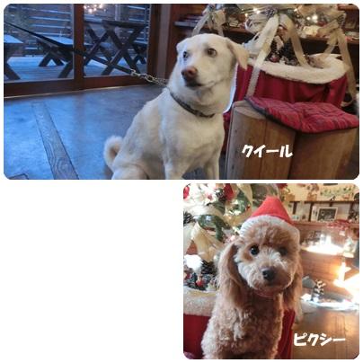2014-12-37-1.jpg