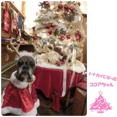 2014-12-39.jpg