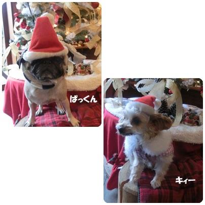 2014-12-6.jpg