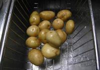 ジャガイモ~小さいので洗っただけ