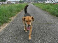 散歩20100623-3