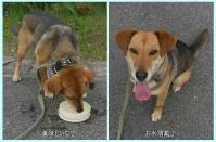 散歩20100623-5