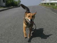 散歩20100624-3