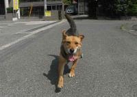 散歩20100624-4