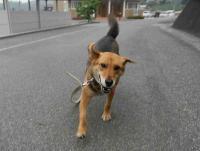 散歩20100625-2