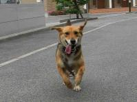 散歩20100625-4
