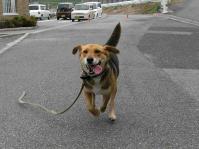 散歩20100625-5
