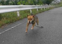 散歩20100626-2