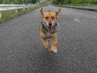 散歩20100626-3