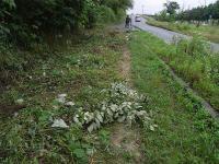 散歩20100626-4