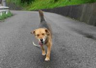 散歩20100627-1