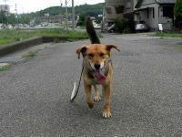 散歩20100628-1