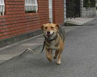 散歩20100629-1